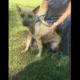 Senior dog has spent her entire life at rural shelter