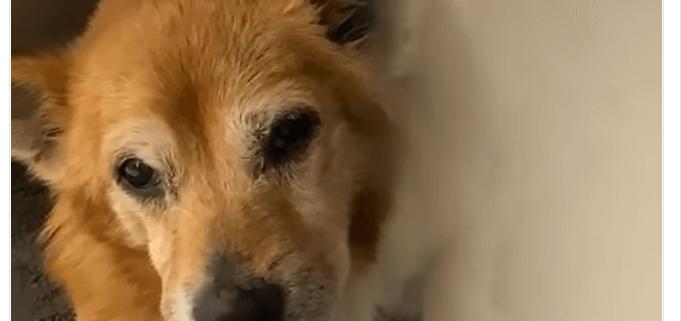 Senior dog surrendered