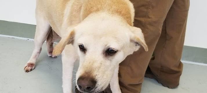Senior dog surrendered when her family moved