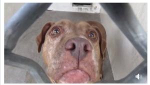 senior dog's heart broken
