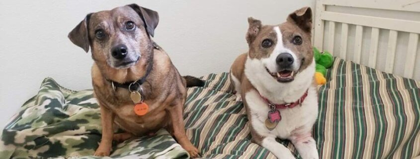 Senior dogs homeless after death of owner