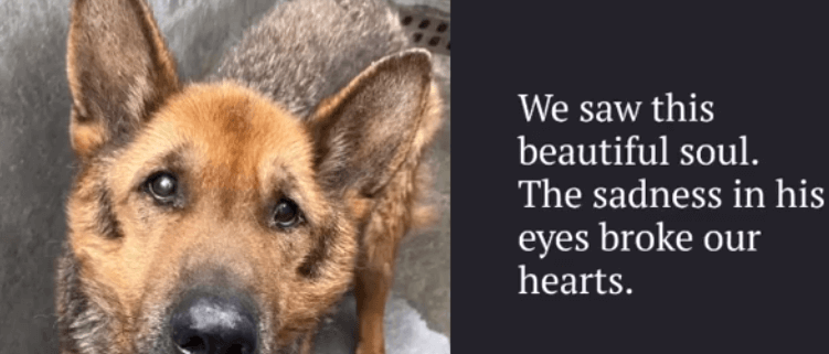 Senior dog has 2 days to live