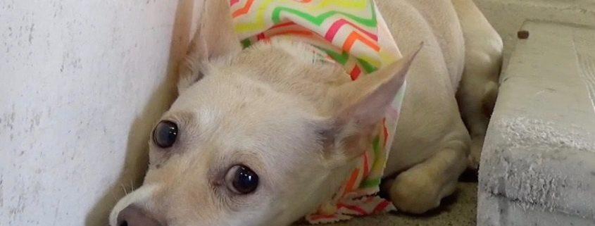 Owner surrendered dog heartbroken