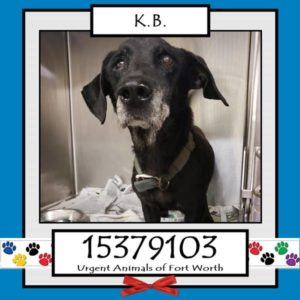 Surrendered senior dog on list to be put down