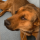 Seriously ill shelter dog will die