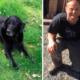 Service dog missing