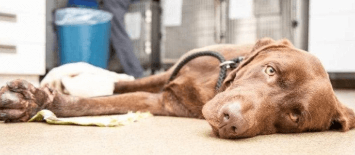 Severely injured dog euthanized