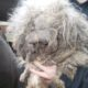 Severely neglected dog found at house fire