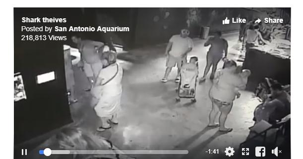 Shark stolen from aquarium