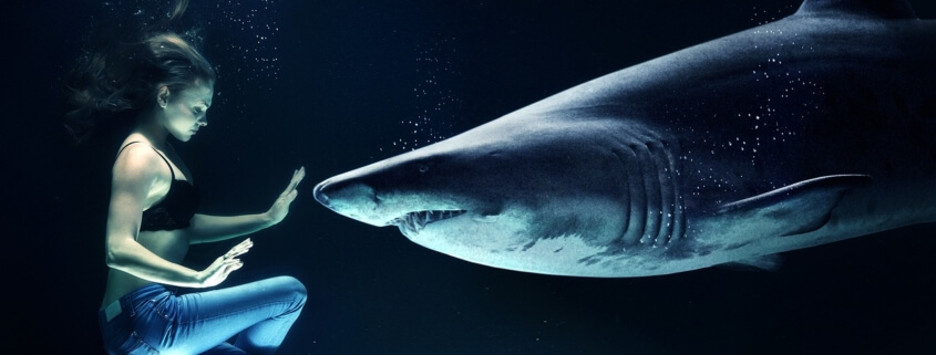 Sharks may be killed for vaccine