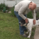 Shelter dog finally adopted