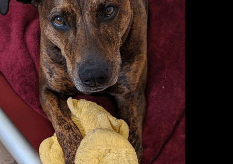 Shelter dog homeless for four years