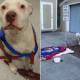 Shelter seeks answers - dog abandoned