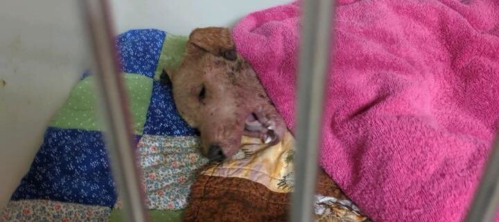 Sickly puppy abandoned in cage