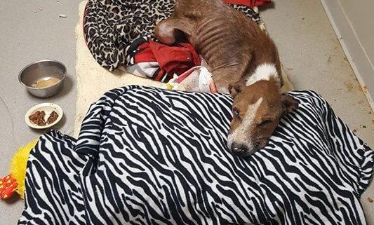Skeletal dog abandoned in Arkansas