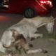 skeletal horse abandoned