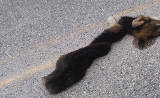 Skinned pup found in road