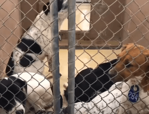 Texas shelter slammed with owner surrenders