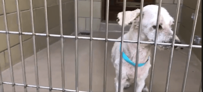 Senior dog is so confused after adopter returned him
