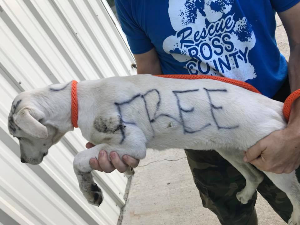 Someone wrote free on abandoned dog