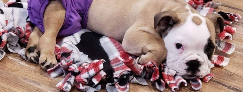 Special adopter needed for differently abled puppy