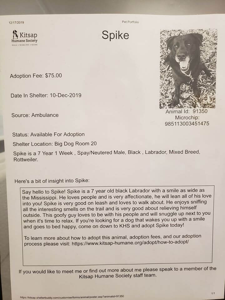 Dog lost his home and family