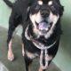 Spunky senior dog locked away at shelter