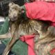 Sad ending for dog rescued from neglect