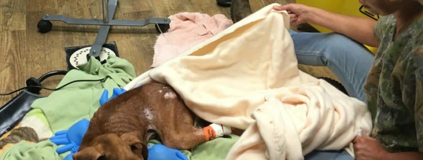 Starved dog found near death in parking lot