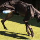 Starved dog gnawed off foot