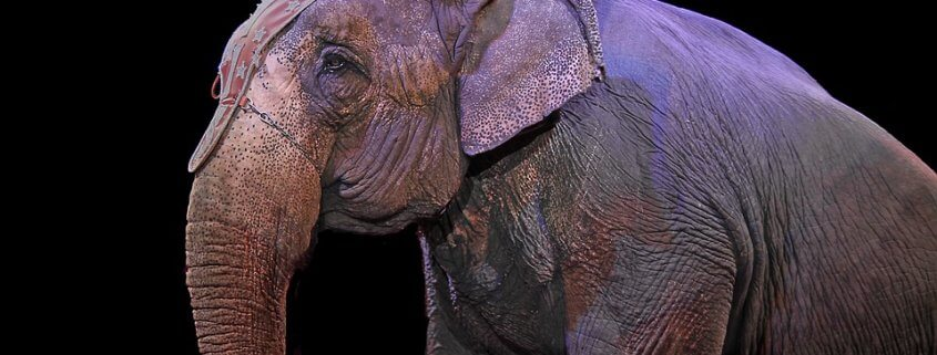 State bans use of wild animals in circuses