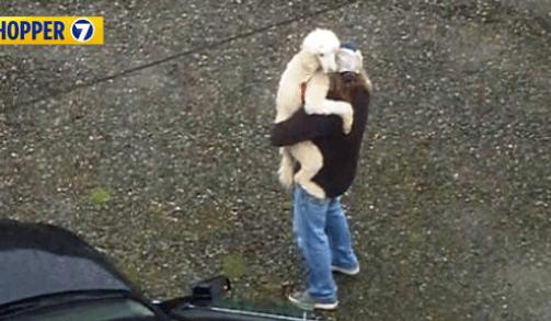 Stolen dog found