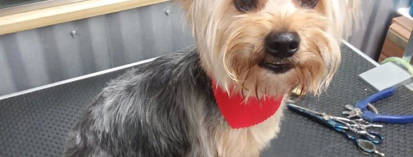 Family desperate to find stolen therapy dog