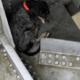 Stranded dog rescued from bridge