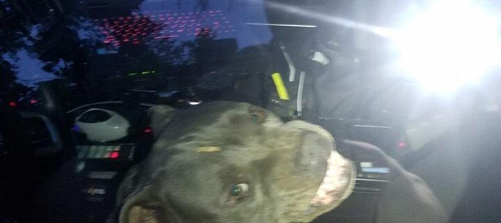 stray dog hijacked patrol vehicle