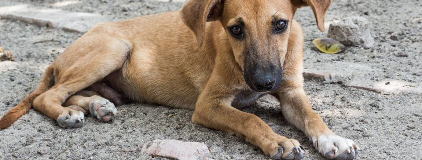 Public outrage over plans to kill stray dogs