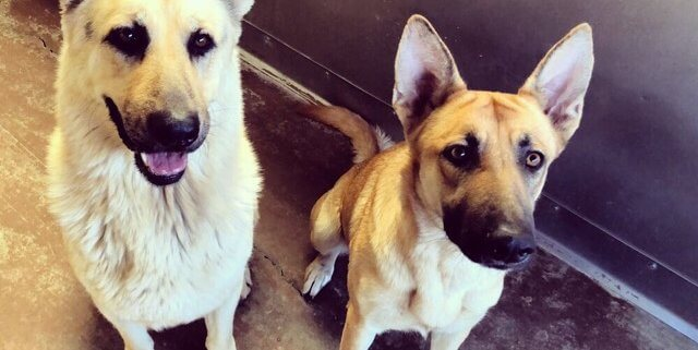 Bonded strays - their family never came to get them