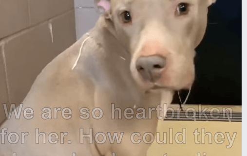 Surrendered dog heartbroken after family left her at shelter