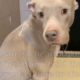 Surrendered dog heartbroken after family left her at shelter