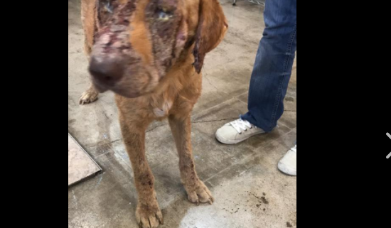 Surrendered dog - rescuers cried over his sad condition