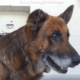 Sweet old boy waits to be saved