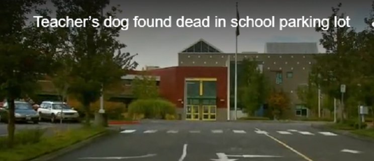 Rescued dog died in school parking lot