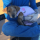 Teen accused of abandoning puppy who was hit by a train