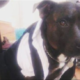 Teen convicted for beating a dog to death