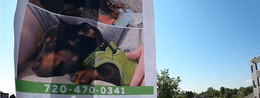 Teens accused of stealing puppy at gunpoint