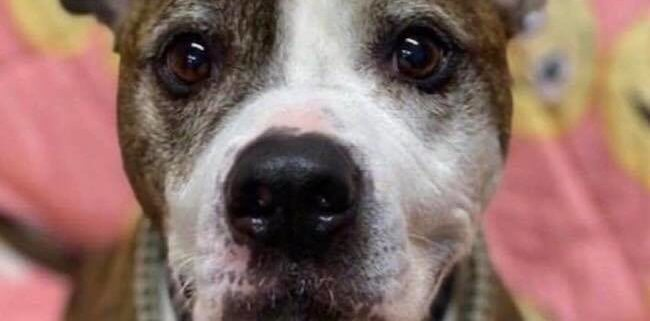 Dog has terminal cancer