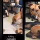 Terrified death row dog