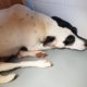 Shelter seeks rescue group for terrified dog