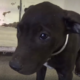 Terrified puppy at shelter