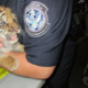Teen tried to smuggle a tiger cub over the border